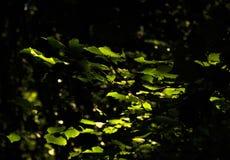 Δασικό φως Στοκ φωτογραφίες με δικαίωμα ελεύθερης χρήσης