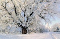 Δασικό χειμερινό τοπίο στοκ φωτογραφίες με δικαίωμα ελεύθερης χρήσης