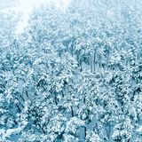 δασικό χιόνι πεύκων στοκ φωτογραφία