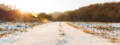 Δασικό χιόνι στο σούρουπο Στοκ φωτογραφία με δικαίωμα ελεύθερης χρήσης