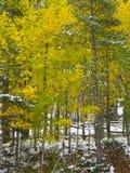 δασικό χιόνι φθινοπώρου Στοκ Φωτογραφίες