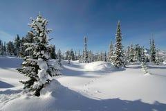 δασικό χιόνι Στοκ Εικόνες