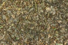 Δασικό χώμα με τα φύλλα στοκ φωτογραφία με δικαίωμα ελεύθερης χρήσης