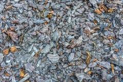 Δασικό χώμα με την τύρφη στοκ φωτογραφίες