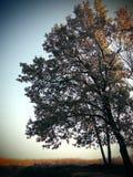 Δασικό όμορφο δέντρο φθινοπώρου βαλανιδιά Στοκ φωτογραφία με δικαίωμα ελεύθερης χρήσης