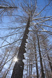δασικό όραμα χιονιού Στοκ εικόνα με δικαίωμα ελεύθερης χρήσης