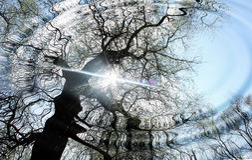 δασικό ύδωρ κυματώσεων Στοκ φωτογραφία με δικαίωμα ελεύθερης χρήσης