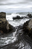 δασικό kelp διακοπτών στοκ φωτογραφίες