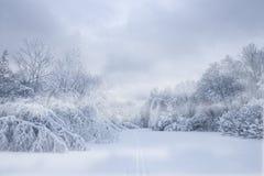 δασικό snowstorm στοκ φωτογραφία