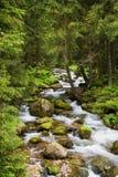 δασικό tatra ρευμάτων βουνών Στοκ φωτογραφία με δικαίωμα ελεύθερης χρήσης
