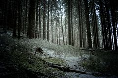 Δασικό Tatra Moutains Στοκ Φωτογραφία