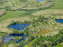 δασικό tundra τοπίων Στοκ εικόνες με δικαίωμα ελεύθερης χρήσης