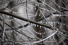 Δασόβια άκρα που στάζουν με τον πάγο στοκ φωτογραφία με δικαίωμα ελεύθερης χρήσης