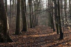 Δασόβια λεωφόρος δέντρων Στοκ Φωτογραφία