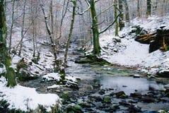 Δασόβια ρεύμα και χειμερινό χιόνι Στοκ εικόνες με δικαίωμα ελεύθερης χρήσης