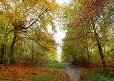 Δασόβια σκηνή περιπάτων φθινοπώρου στοκ φωτογραφίες