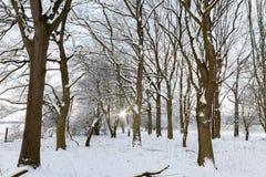 Δασόβια σκηνή χειμερινού χιονιού στοκ φωτογραφίες με δικαίωμα ελεύθερης χρήσης