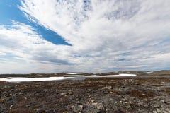 Δασύτριχη φύση Στοκ Φωτογραφίες