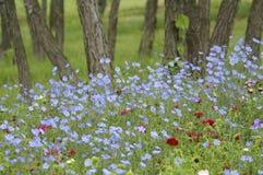 δασώδης περιοχή λουλουδιών Στοκ φωτογραφίες με δικαίωμα ελεύθερης χρήσης