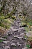 δασώδης περιοχή μονοπατιών του Derbyshire Στοκ Εικόνες