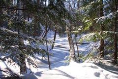 δασώδης περιοχή χιονιού στοκ φωτογραφία με δικαίωμα ελεύθερης χρήσης