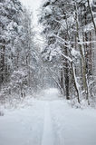 δασώδης περιοχή χιονιού &sigma Στοκ Φωτογραφία
