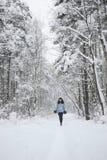 δασώδης περιοχή χιονιού &sigma Στοκ φωτογραφίες με δικαίωμα ελεύθερης χρήσης