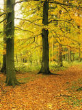 δασώδης περιοχή Στοκ φωτογραφίες με δικαίωμα ελεύθερης χρήσης