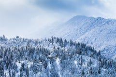 Δασώδεις κλίσεις των βουνών Καύκασου στον ήλιο σύννεφων Στοκ φωτογραφίες με δικαίωμα ελεύθερης χρήσης