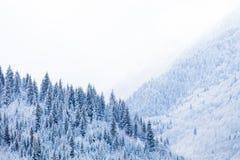 Δασώδεις κλίσεις των βουνών Καύκασου στον ήλιο σύννεφων Στοκ Εικόνες