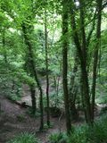 Δασώδεις περιοχές, πράσινη περιοχή, μαύρο πάρκο Denham στοκ φωτογραφία με δικαίωμα ελεύθερης χρήσης