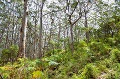 Δασώδεις περιοχές δυτικών Αυστραλιών Στοκ εικόνα με δικαίωμα ελεύθερης χρήσης