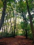 Δασώδεις περιοχές φθινοπώρου Στοκ Εικόνες