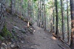 Δασώδης περιοχή με τα ίχνη πεζοπορίας σε ένα κωνοφόρο δάσος, κοντά στο Πόρτλαντ Όρεγκον Στοκ φωτογραφία με δικαίωμα ελεύθερης χρήσης