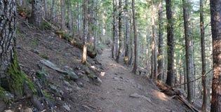 Δασώδης περιοχή με τα ίχνη πεζοπορίας σε ένα κωνοφόρο δάσος, κοντά στο Πόρτλαντ Όρεγκον Στοκ Φωτογραφίες