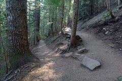 Δασώδης περιοχή με τα ίχνη πεζοπορίας σε ένα κωνοφόρο δάσος, κοντά στο Πόρτλαντ Όρεγκον Στοκ φωτογραφίες με δικαίωμα ελεύθερης χρήσης