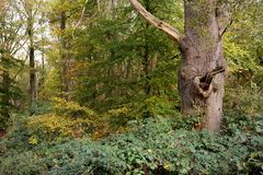 Δασώδης περιοχή με το απομονωμένο νεκρό δέντρο Στοκ Εικόνες