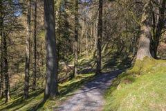 Δασώδης περιοχή στο Tarn Hows Στοκ φωτογραφίες με δικαίωμα ελεύθερης χρήσης