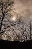 Δασώδης περιοχή το χειμώνα Στοκ Φωτογραφίες