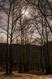Δασώδης περιοχή το χειμώνα Στοκ φωτογραφία με δικαίωμα ελεύθερης χρήσης
