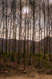 Δασώδης περιοχή το χειμώνα Στοκ φωτογραφίες με δικαίωμα ελεύθερης χρήσης