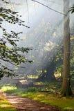 Δασώδης περιοχή Smokey Στοκ εικόνες με δικαίωμα ελεύθερης χρήσης