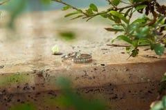 Δαχτυλίδια αρραβώνων στη φύση, πράσινο υπόβαθρο ιστορία αγάπης φιλήματος κοριτσιών κήπων αγοριών Γαμήλια δαχτυλίδια σε ένα όμορφο Στοκ Φωτογραφία