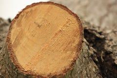 Δαχτυλίδια δέντρων, ξύλο στοκ εικόνες