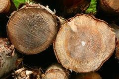 Δαχτυλίδια δέντρων Στοκ Εικόνα