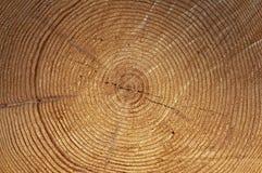 Δαχτυλίδια δέντρων Στοκ φωτογραφίες με δικαίωμα ελεύθερης χρήσης
