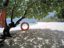 Δαχτυλίδια ζωής που κρεμούν στο δέντρο στην παραλία στο νησί Upolu, Σαμόα, Sout Στοκ φωτογραφία με δικαίωμα ελεύθερης χρήσης