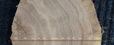 Δαχτυλίδια δέντρων, που χρονολογούνται στοκ εικόνες με δικαίωμα ελεύθερης χρήσης
