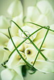 Δαχτυλίδια και λουλούδια στοκ εικόνες με δικαίωμα ελεύθερης χρήσης