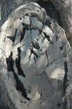 Δαχτυλίδια ρίζας Στοκ εικόνες με δικαίωμα ελεύθερης χρήσης